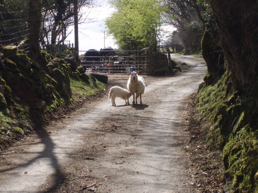 A Pembrokeshire traffic obstacle
