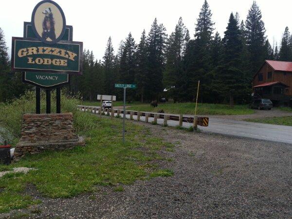 Buffalo roaming outside my accommodation, Grizzly Lodge, Silver Gate