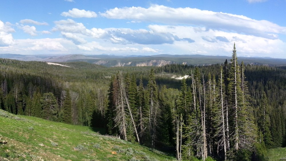 A great panoramic view of Yellowstone