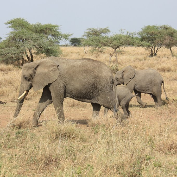 Day 5: Serengeti National Park