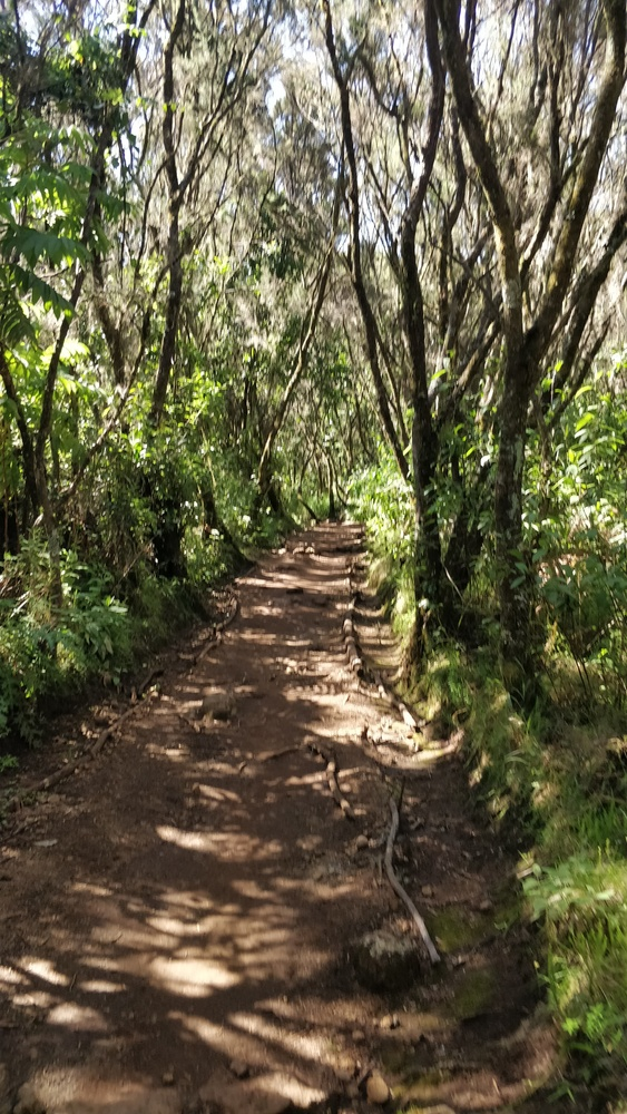 A view of the path from Kinapa to Mandara